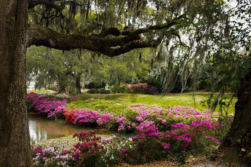 Fun things to do in Charleston : Middleton Place House & Museum.